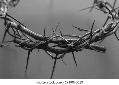 black and white crown of thorns up close