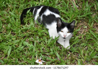Black and white cute cat lying on green grass.