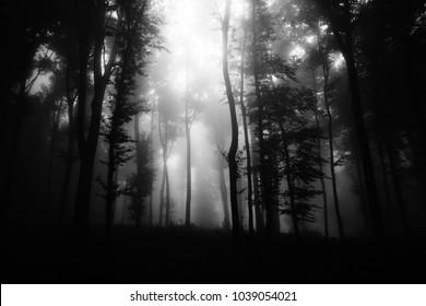 black and white dark woods