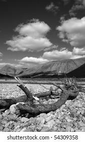 Black & white of dead tree on the shore of river Etive in Glen Etive, Scotland