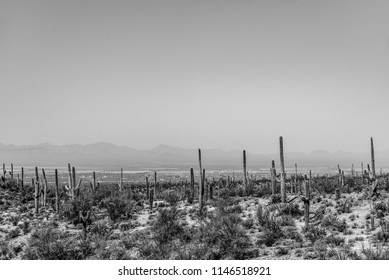 Black and white desert landscape with Saguaro cactus and bushes with hazy mountains in background under hazy sky.
