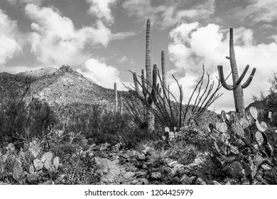 Black and white detail of Pima Canyon hiking trail. A rocky stone path leads up a hillside covered in Sonoran Desert plant life. Saguaro cactus, prickly pear, ocotillo and cholla dot the landscape.