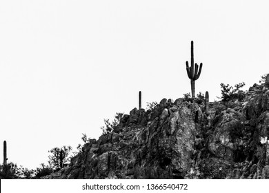 Black and white detail of a rocky hill covered in saguaro cactus and other cacti in Saguaro National Park. A Sonoran Desert landscape in the American Southwest. Pima County, Tucson, Arizona. 2019.