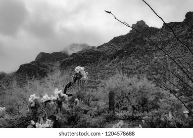 Black and white detail of Saguaro National Park near Gates Pass west of Tucson Arizona in the Sonoran Desert with teddy bear cholla, cactus, ocotillo and other cacti dotting the misty landscape. 2018.