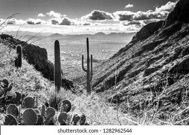 Black and white detail, Sonoran Desert landscape in the Catalina Mountains along the Finger Rock hiking trail north of Tucson, Arizona. Prickly pear cactus, saguaro cacti and ocotillo on a hillside.