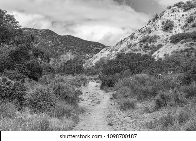 Black and white detailed forest trails for hiking and biking in California mountains