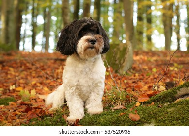 Black and white dog in autumn forest
