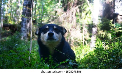 Black and white dog feels insecure, fearful in the wild forest, unfamiliar place and new circumstances outside the protected are