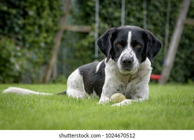 Black and white dog laying guard in green field