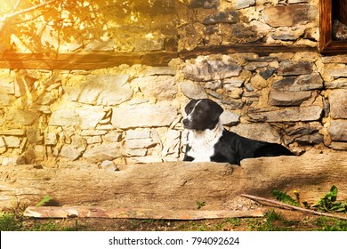 Black and white dog lying on a stone terrace below a rustic stone house looking alertly to the left side of the frame, with copy space and golden glow from the sun