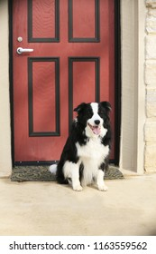 a black and white dog waiting at the door
