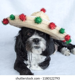 Black and white dog wearing a sombrero tilted to the side decorated with green and red balls for Cinco de Mayo or Christmas.