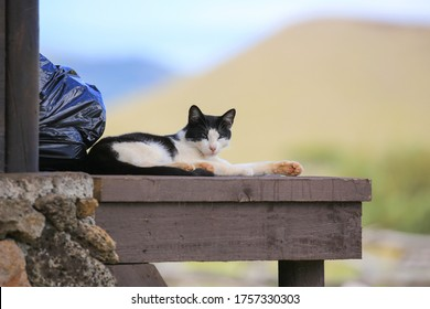 Black and white domestic cat resting on a wooden deck in Rapa Nui (Eastern Island), Chile.