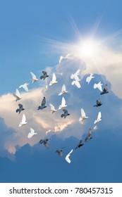 Black & White doves makes form the shape of the heart