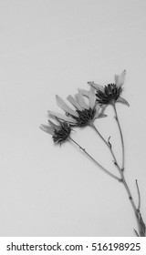 Black and white dry plant