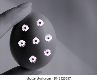 Black and white Easter egg with flovers. Easter background. Happy easter egg. Isolated easter egg.