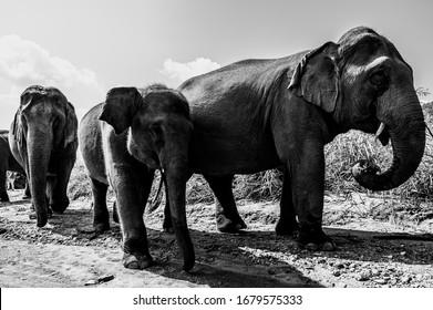 Black and white elephant close up photo.