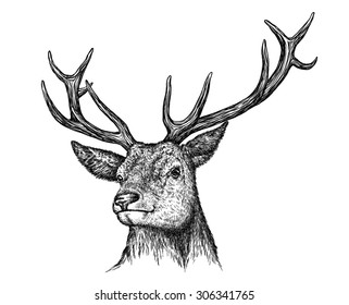 black and white engrave isolated deer head