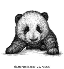 black and white engrave isolated panda bear