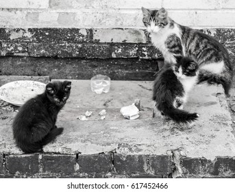 In black and white. Family of homeless cats, Mother cat and kittens. Sad, careful of stray animals.
