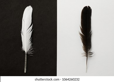 Black and White feathers on background as Yin and Yang
