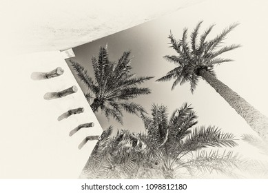 A black and white filtered image of the exterior adobe wall of a traditional arabian house with strong shadows showing palm trees.