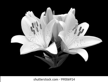 White flower black background images stock photos vectors black and white flower lily a close up isolated on a black background invitations mightylinksfo