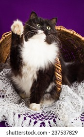 Black and white fluffy cat sitting near the basket. Purple background