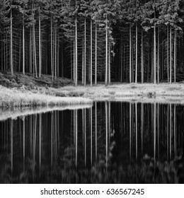 Black and white forest in calm lake reflection