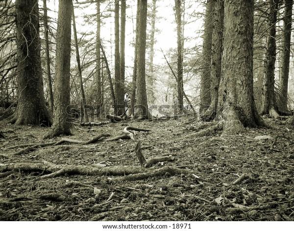 Black & White of Forest Floor.