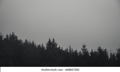 Black And White Forest In Fog