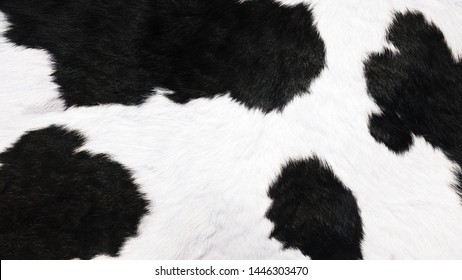 black and white fur of cow use for background or back drop