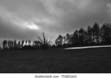 black and white glade and trees after winter