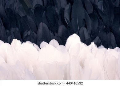 A lot of black and white goose feathers close up