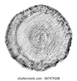 Black white and gray toned tree cut from the woods. Round tree ring pattern with texture and grain. Detailed object on white background.