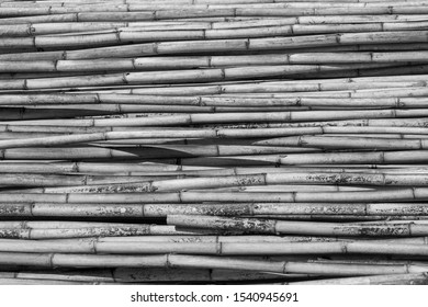 Black and white group of bamboos background.Pile of bamboo pole texture with natural pattern.