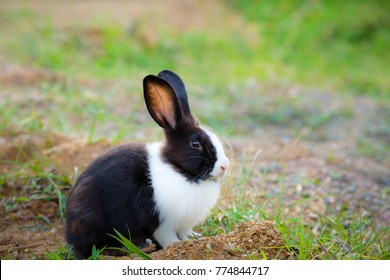 Black and white hair bunny in green field.