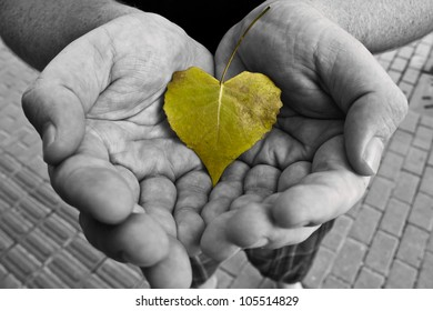 Black and White Hands Cradling a Small Green Leaf