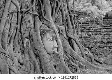 Black and White head of Buddha image in tree roots at Wat Mahathat temple, Ayutthaya, Thailand