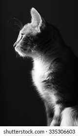 black and white head profile of the cat