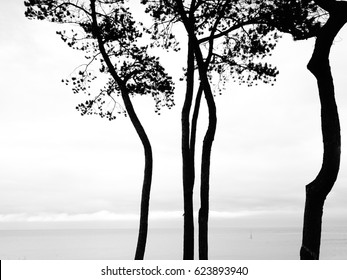 Black and white high contrast photograph of trees silhouettes
