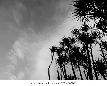 Black and white high contrast photograph of  palm trees