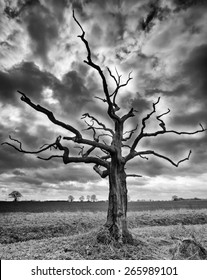 A Black and White high definition photograph of a lone tree in a large field under a stormy sky shot near Grafham Water, Cambridgeshire, East Anglia, UK.