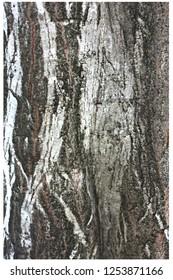 Black and white hornbeam trunk