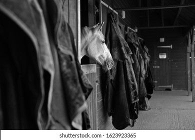 Black & White Horse in Stable