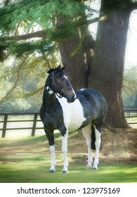 A black and white horse stands alone in front of a tree.