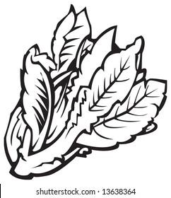 Black and white illustration of lettuce
