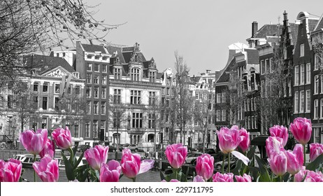 black and white image of an amsterdam cityscape with pink tulips