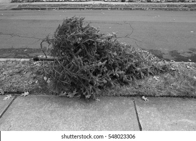 Black and white image of a discarded Christmas tree, outside on the side of the road.