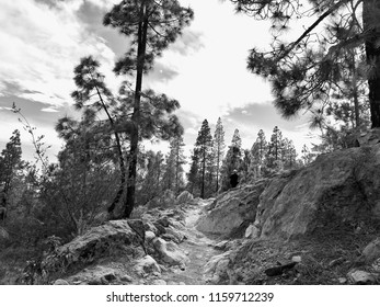 Black and white image of a fast-moving landscape on the Canary Island of Tenerife. high canarian pines and other trees in between a footpath.